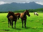 梦到草原预兆着什么,梦到一片草原到底好不好 自然,草原,一片草原