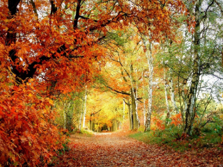 梦见森林好不好?梦见森林预示什么? 自然,森林,梦见森林