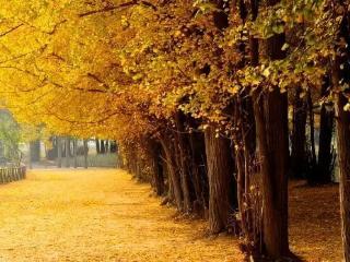 梦到银杏落叶满地预兆什么,梦到毛虫在叶子上蠕动好不好? 自然,银杏,毛虫