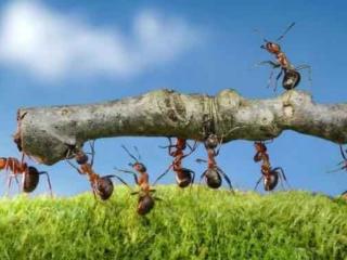 梦到自己被一群蚂蚁包围预兆什么,梦中鸟儿追逐蚂蚁好不好? 自然,蚂蚁搬家,鸟儿