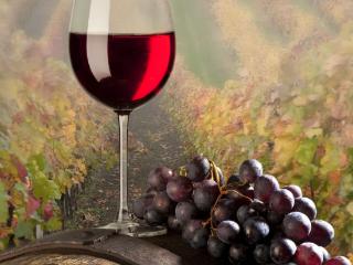 白葡萄酒和红葡萄酒有哪些区别?哪种葡萄酒口感好? 名酒资讯,红葡萄酒,白葡萄酒,红酒