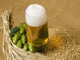 喝啤酒会使人发胖吗?喝酒不会发胖的原因? 名酒资讯,啤酒,发胖