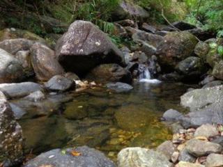 梦到小溪预兆着什么,梦到小溪到底好不好 自然,小溪,溪流