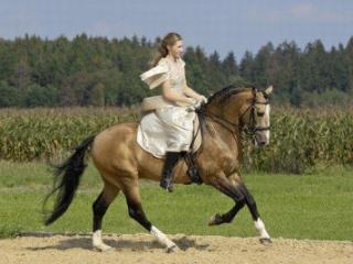 女子梦见与恋人骑马,代表什么意思?感情生活会有什么变化? 情爱,梦见与恋人骑马