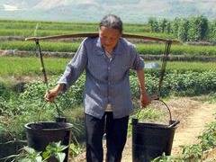 梦见堆肥是什么意思?梦见堆肥是什么预兆? 活动,梦到堆肥,男士梦到堆肥