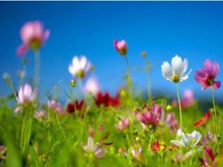 我为什么会梦到春天一幅欣欣向荣的景色,是有什么好事吗? 梦的故事,春天,梦到一年四季都是春天