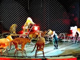 梦见马戏团表演是什么意思?做梦梦见马戏团表演好不好? 生活,梦到马戏团,梦到马戏团驯狮子