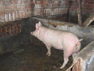 梦见猪圈是什么意思?梦见猪圈是什么预兆? 建筑,梦见猪圈,梦到骑着猪到处跑