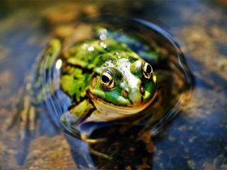 梦见在深水草丛里的青蛙好吗?梦到青蛙跳到自己身上代表什么? 人物,梦到青蛙跳到自己身上,梦见青蛙被绑成一团
