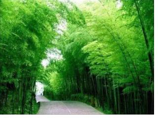 梦见竹林是什么意思?做梦梦见竹林寓意什么? 植物,梦见竹林,运气亨通,梦境解说