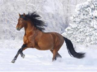 梦见马受伤是什么意思?做梦梦见马受伤寓意什么? 动物,梦见马受伤,预示,梦境解说