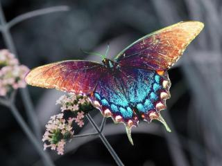 梦中的蝴蝶与地位和爱情有关,做梦梦见蝴蝶预示什么? 动物,蝴蝶,梦见蝴蝶,梦见很多蝴蝶