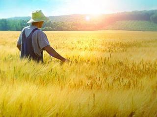 梦到农田预兆着什么,梦到农田到底好不好 自然,农田,梦到农田被毁