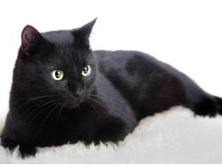 梦见浑身是血的黑猫是什么意思?做梦梦见浑身是血的黑猫寓意什么 动物,梦见浑身是血的黑猫,生活陷入困境,梦境解说