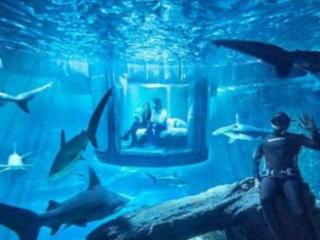 梦见海洋馆的鲨鱼是什么意思?做梦梦见海洋馆的鲨鱼好不好? 建筑,梦见海洋馆,梦见海洋馆的鲨鱼