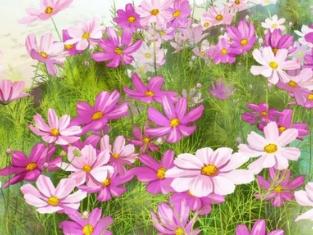 做梦梦到鲜花预示着什么,梦到鲜花是好是坏 梦的百科,鲜花,梦到鲜花