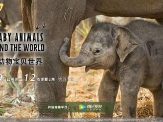 《动物宝贝世界》纪录片聚焦成年动物宝宝日常生活 动物宝贝世界