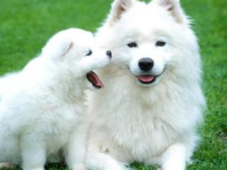 梦见家里来条狗是什么意思?梦见家里来条狗是什么预兆? 梦境解析,梦见家里来条狗,生意人梦到家来一只狗