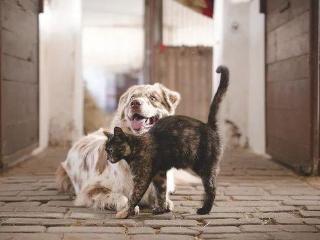 梦见喂猫狗代表什么?梦见喂猫狗是什么寓意? 梦境解析,梦见喂猫狗,恋人梦到喂猫狗