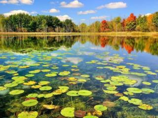 生意人梦到湖水富足预示什么?梦到湖泊相关梦的解析是怎样的? 自然,梦到湖泊相关梦,梦到湖泊相关梦的分析