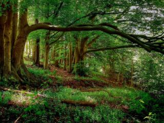 梦到枯黄的灌木丛意味什么?梦到丛林的相关梦预兆什么? 自然,梦到丛林的相关梦,梦到丛林相关梦的分析