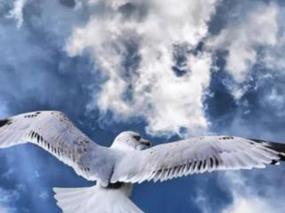 梦见一只老鹰是什么意思?梦见一只老鹰是什么预兆? 梦境解析,梦见一只老鹰,梦见放鹰捉鸟