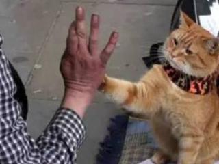 猫咪的高分经典电影《猫的报恩》7.6分 猫的报恩