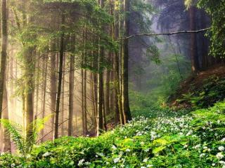 梦见森林的含义是什么?梦见森林代表何意思? 自然,梦见森林,男人梦见森林