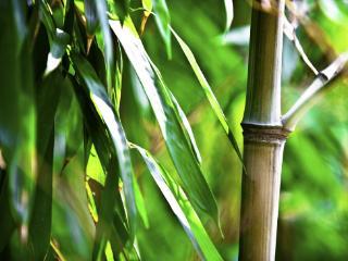 生意人梦到砍竹子表明什么?不同的人梦到砍竹子分别预示什么? 活动,梦到砍竹子的梦,梦到砍竹子的梦解析