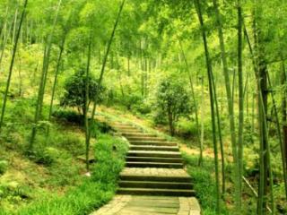 男性做梦梦见扛竹子到底是怎么回事?代表着什么? 植物,梦见竹林烧毁,男性梦见扛竹子