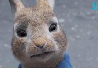 《比得兔2:逃跑计划》票房破6370万,郑凯彭于晏压不住 郑凯