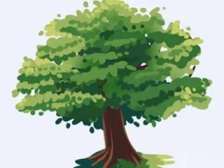 做梦梦见大树之后往往会有什么预示?现实中会发生什么? 植物,大树,梦见大树