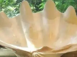 本命年的人梦中看见大贝壳,代表什么意思? 西方解梦,梦见贝壳,梦见大贝壳