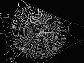 梦见蜘蛛网是什么意思?梦见蜘蛛织网的梦境解析 梦境解析,梦见蜘蛛网,梦见蜘蛛网是什么意思