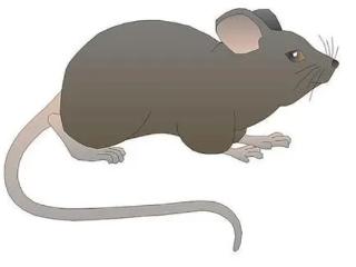 不同的人在梦中看见家里有老鼠,预示着什么? 动物,梦见老鼠,梦见家里进了老鼠