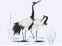 在梦境中出现了一只鹤,而得此梦是不是有什么寓意呢? 动物,鹤,梦见鹤的寓意