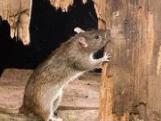 当老鼠洞出现在梦境中的时候,是不是有什么具体的寓意呢? 梦境解析,梦见老鼠洞,梦见老鼠洞的寓意
