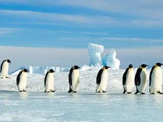 梦见南极是什么意思?梦见南极是什么预兆? 自然,梦见南极,孕妇梦见南极