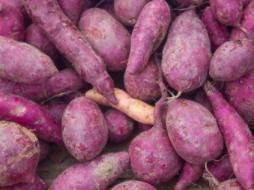 睡觉的时候梦见很多红薯在现实中意味着什么?梦见很多红薯好吗? 植物,红薯,梦见很多红薯什么意思
