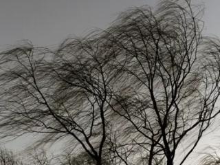 梦见风很大的含义是什么?梦见风很大意味着什么? 自然,梦见风很大,孕妇梦到风大
