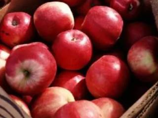 梦见偷苹果的含义是什么?梦见偷苹果意味着什么? 活动,梦见偷苹果,孕妇梦见偷苹果