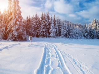 梦见满地都是雪的含义是什么?梦见满地都是雪意味着什么? 自然,梦见满地都是雪,孕妇梦到满地都是雪