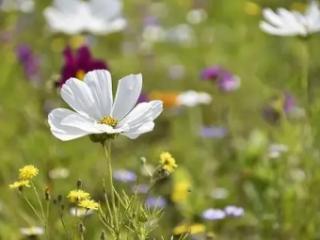 女人梦到摘花是什么意思?女人梦到自己摘花代表什么 梦境解析,女人梦到摘花,女人梦到摘花什么意思