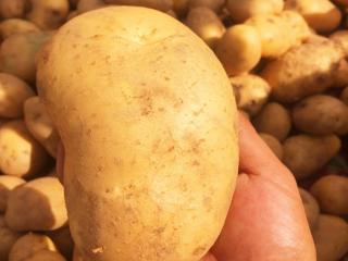 做梦梦到很大的土豆,这个梦境是不是不好? 植物,梦到土豆,梦到土豆很大