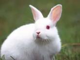 当睡着之后,梦境中的自己竟然被兔子抓伤了,会不会倒霉啊? 动物,兔子,梦见被兔子抓伤