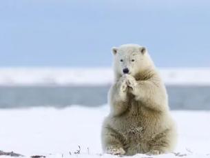 梦到杀死熊是什么意思?做这样的梦代表什么 动物,梦到熊,梦到杀死熊是什么意思