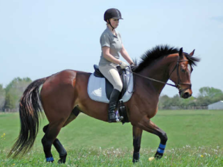 女人梦到骑马是什么意思?女人梦到骑马慢慢走什么意思 梦的百科,女人梦到骑马,女人梦到骑马什么意思