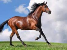 在梦境中,突然有一只马踢了自己,得此梦近期运势如何? 动物,马,梦见马踢自己