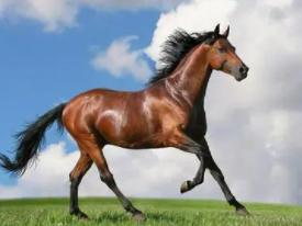 你知道睡觉梦见马受伤了在现实中代表什么吗?一起来看看吧! 动物,马,梦见马受伤是什么意思