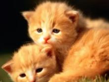 夜晚在睡着后,梦境中的猫哭声就像小孩一样,得此梦有何寓意? 动物,猫,梦见猫像小孩一样哭